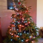 This year's tree - a much more manageable size!
